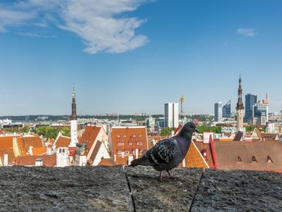 首次办理爱沙尼亚签证容易出签吗